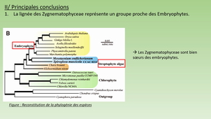 Présentation article paléontologie - « Genomes of Subaerial Zygnematophyceae Provide Insights into Land Plant Evolution »